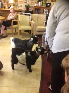 A Few More Visitors to Orchid Care Home